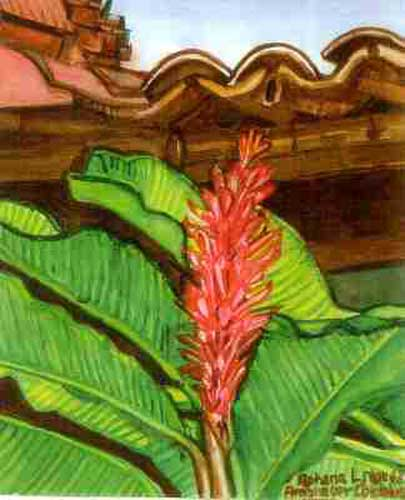 Close-up, Flowering Banana Tree and Tiles